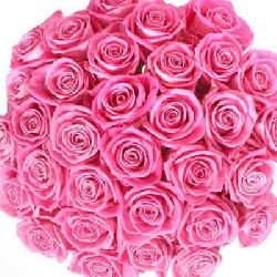 Pink Roses Bouquet 100 Flowers