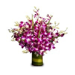 Purple Orchid Bunch 12 Stems