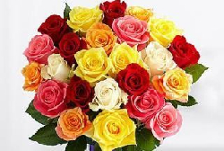 Magical Sunny Mixed Roses