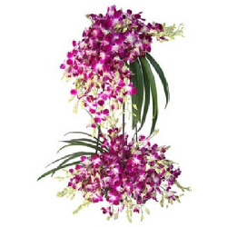 Purple Orchids Tall...