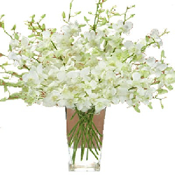 White Orchid Vase 6 Stem Of...