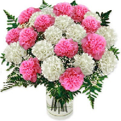36 Pink N white Carnations...
