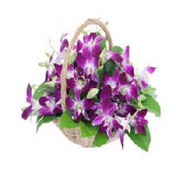 Purple Orchid in Basket 20...