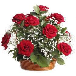 Basket of  12 Red Roses