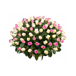 100 Pink & White  roses in...