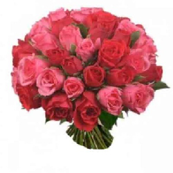 36 Pink and Red Rose Bunch...